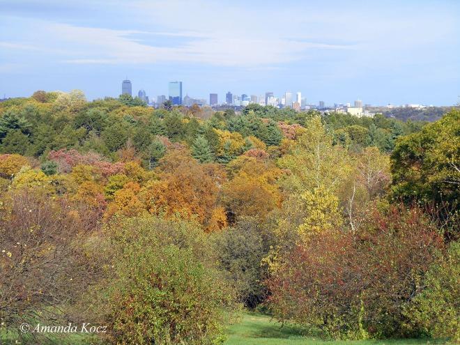 Boston skyline from the Arnold Arboretum