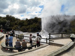 Lady Knox geyser at Wai-O-Tapu park