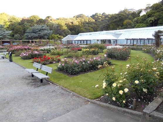 Rose Garden in the Wellington Botanic Gardens