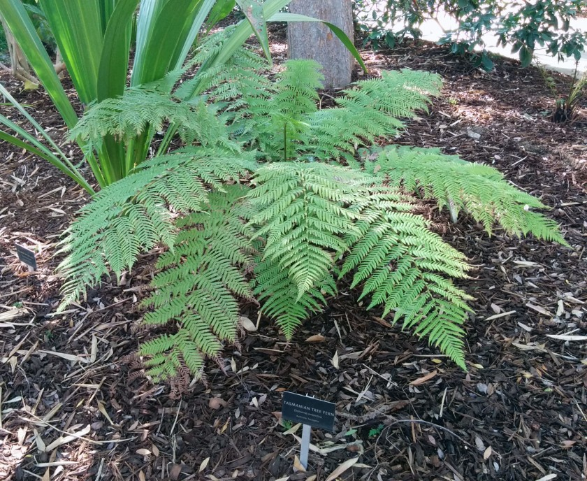 A fern like this one seen at the Norton Simon Museum