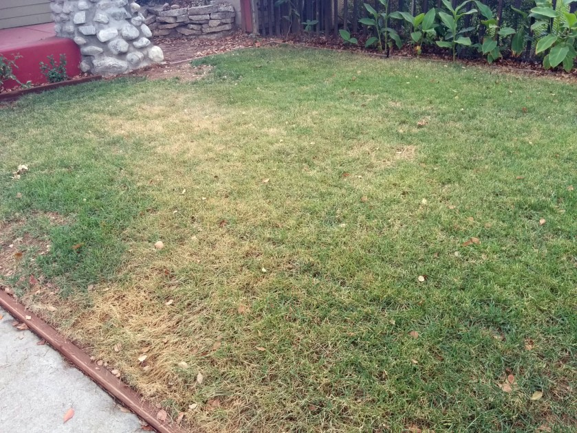 Lawn - brown in places