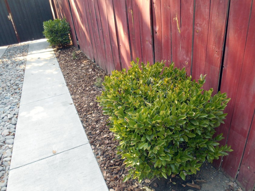 Mystery bushes