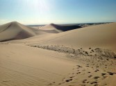 North Algodones Dunes Wilderness Area.