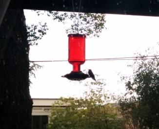 Hummingbird on our feeder.