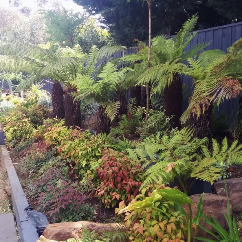 Melbourne garden - want!