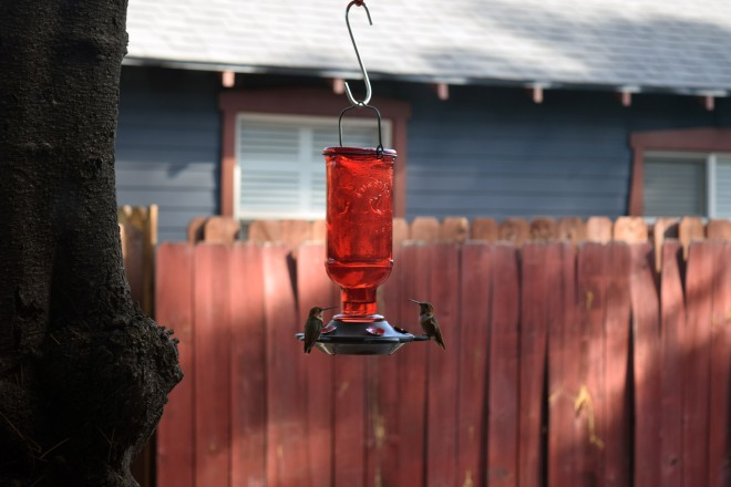 Can't go wrong when you get hummingbirds in your garden.